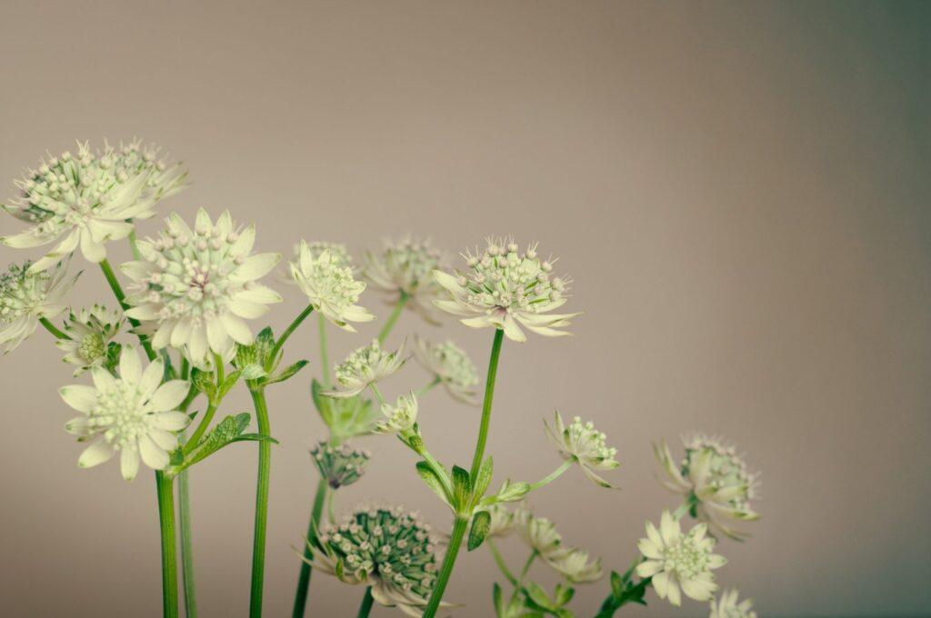 Bylinky jsou účinným doplňkem klasické léčby.