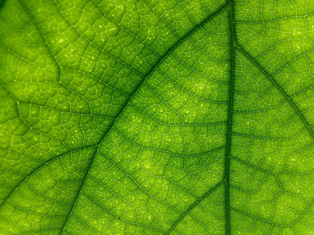 Počet firem, pro které je při výrobě produktů důležitá etika a šetrnost k přírodě, neustále roste.