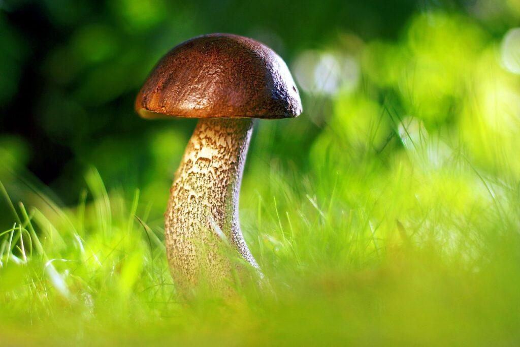 Z nasbíraných hub lze uvařit například lahodný houbový krém.