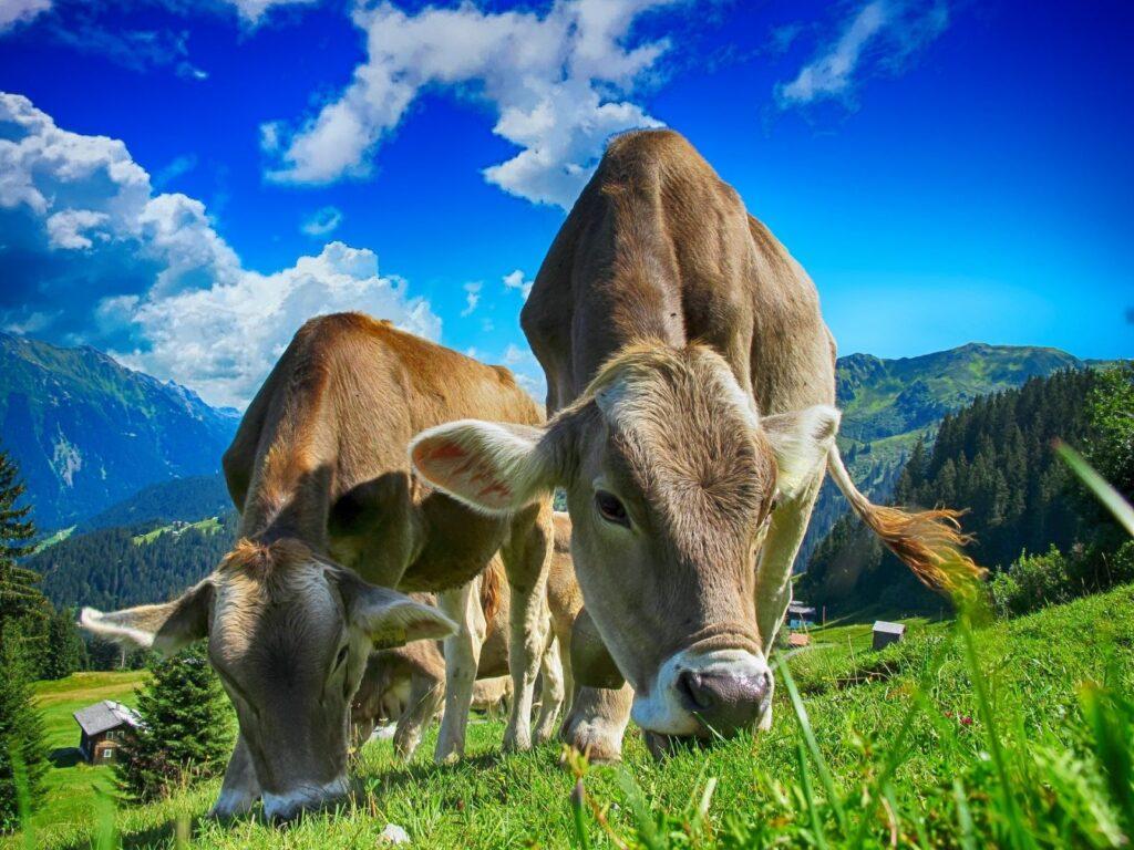 Posluchači přednášky se mohou dozvědět zajímavé informace například o chovu hospodářských zvířat.