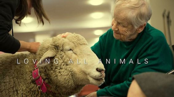 Součástí veganského způsobu života je odmítání jakéhokoli zneužívání zvířat.