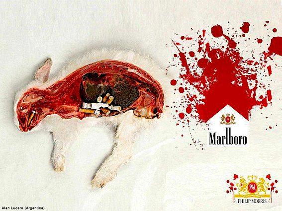 S kuřáctvím se pojí i téma testování na zvířatech. Není proto divu, že se vegané snaží s kouřením přestat.
